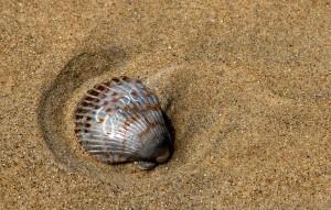 eee-pc-shell-mockup-300-x-191