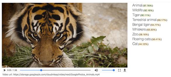 google otomatik ogrenme