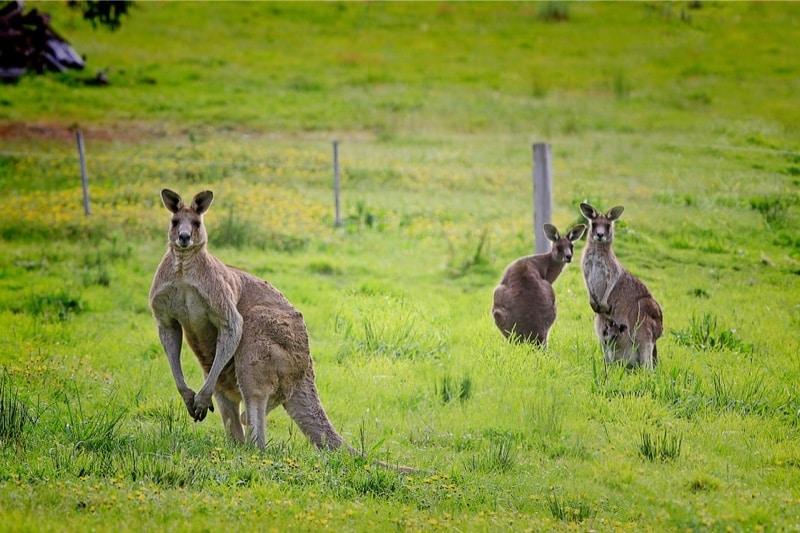 volvo surucusuz otomobil kanguru