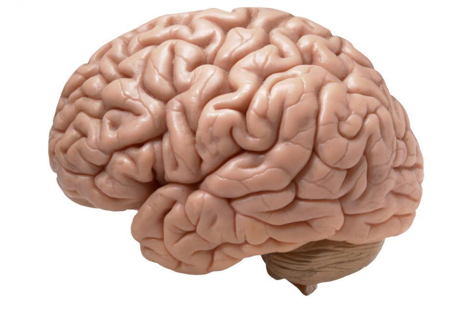 beyin alzheimer