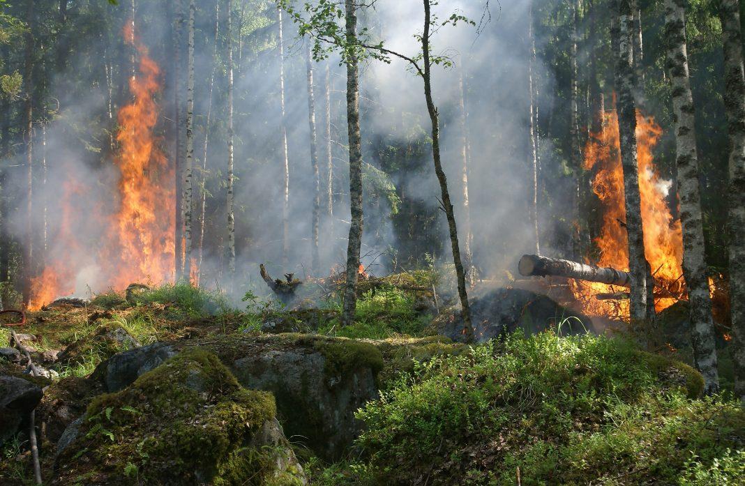 google haritalar orman yangını